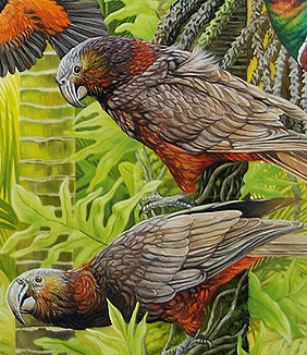 craig platt nz bird artist, kaka painting detail